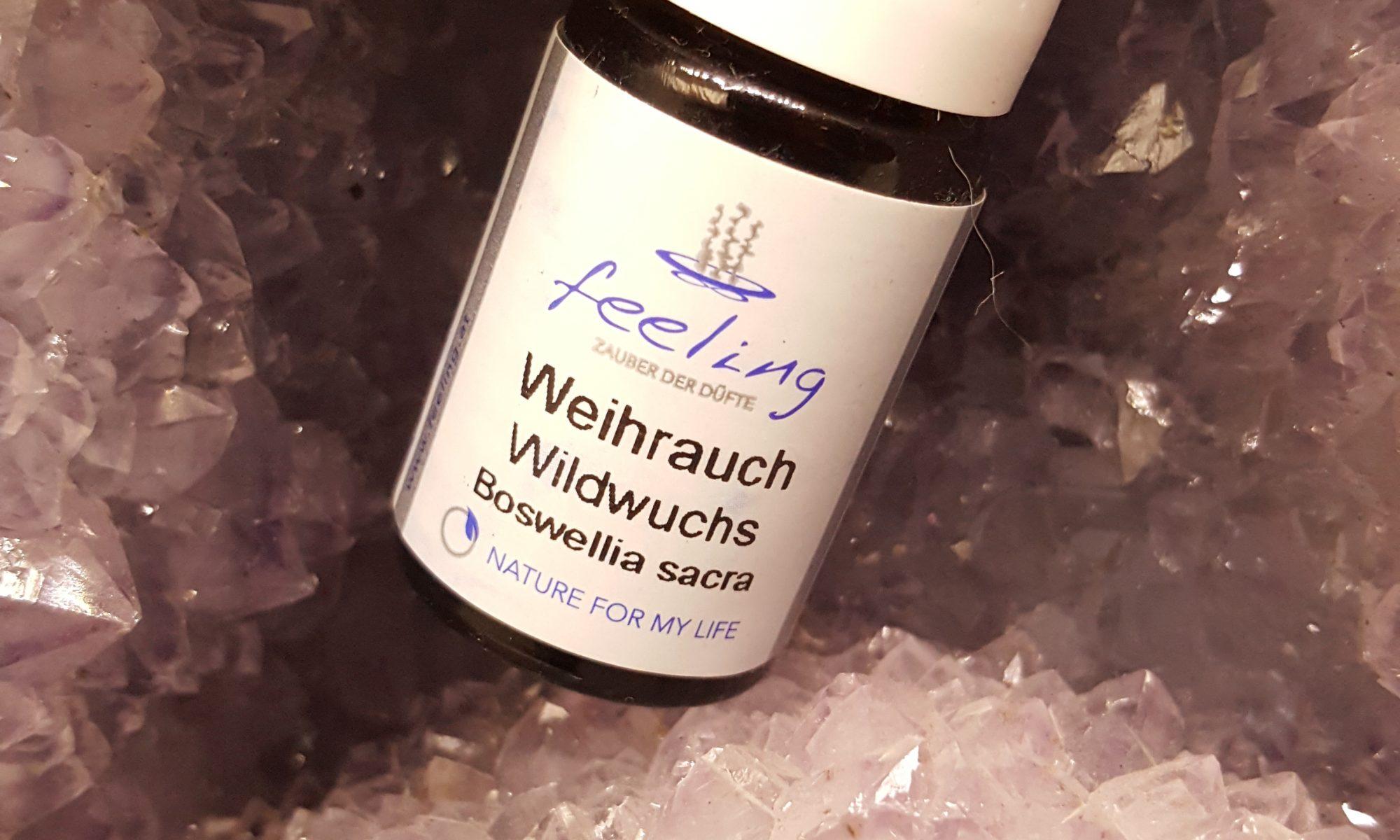 Weihrauch Wildwuchs (Boswellia sacra)